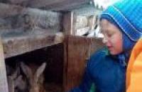 Мастер-класс для детей по ведению кролиководства