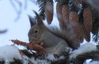 Онлайн -фотомарафон «Зимушка-зима»